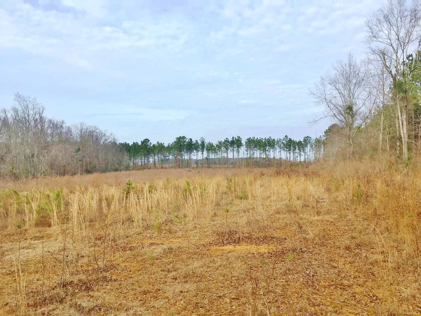 Large Acreage for Sale Walthall County, MS