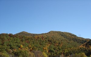 LARGE ACREAGE HUNTING AND  RECREATIONAL TRACT IN BLAND VA