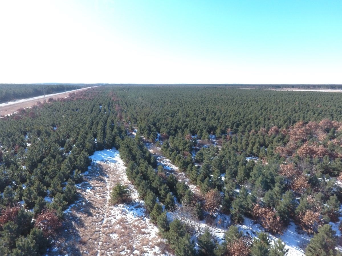 35 acre tract of Adams County Timberland