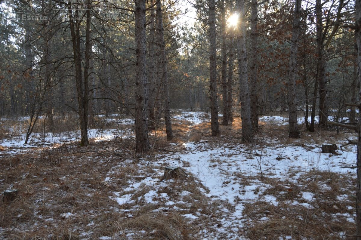 80 acres of Pine Timber tract Adams County