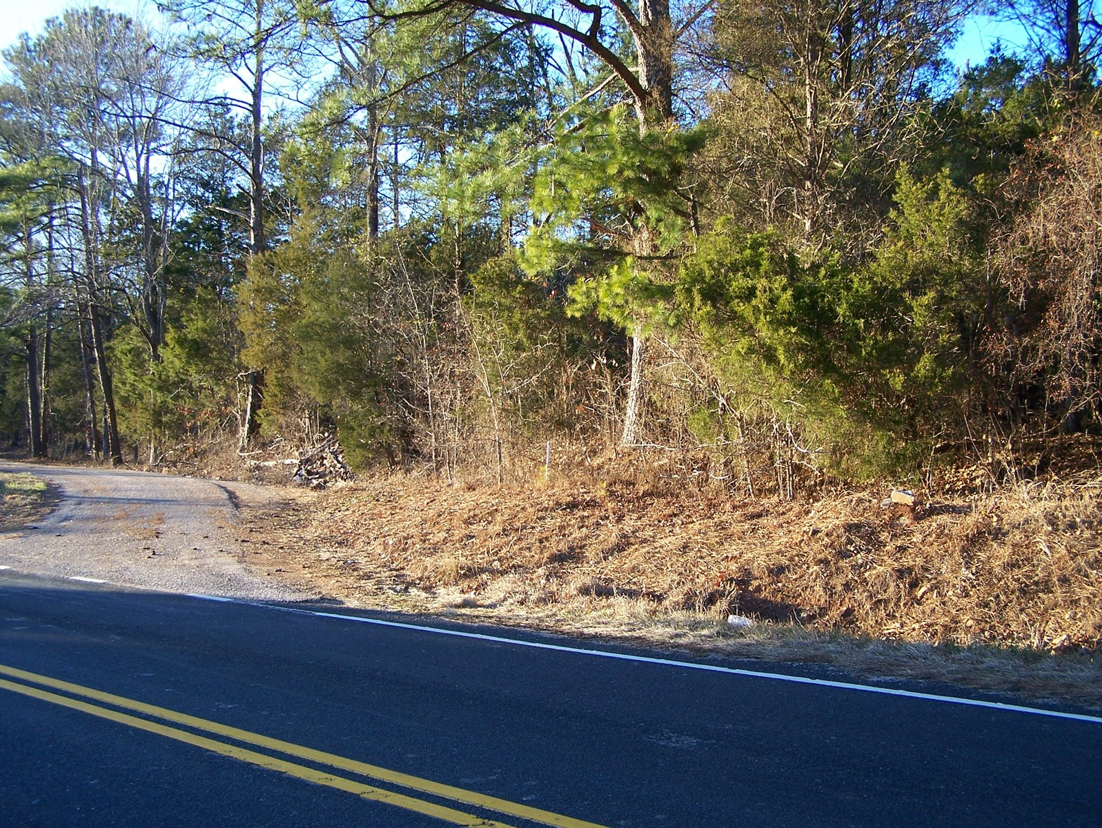 65 ROLLING ACRES FOR HUNTING OR DEVELOPMENT IN RIDGEWAY, SC
