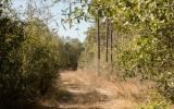 10 Acres For Sale in North Florida