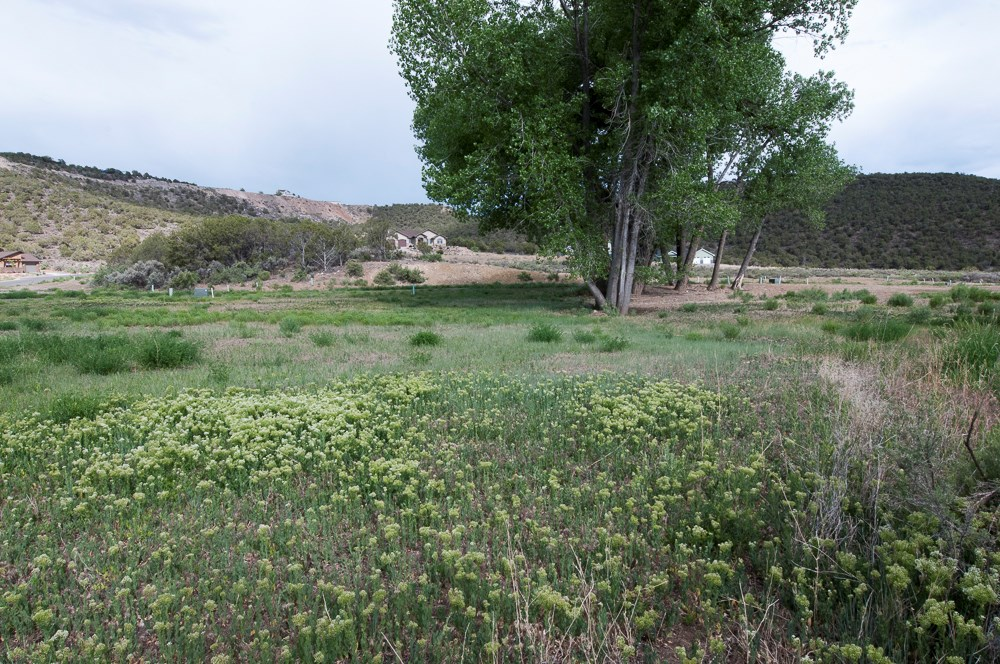 Mountain Golf property for sale, Cedaredge Colorado