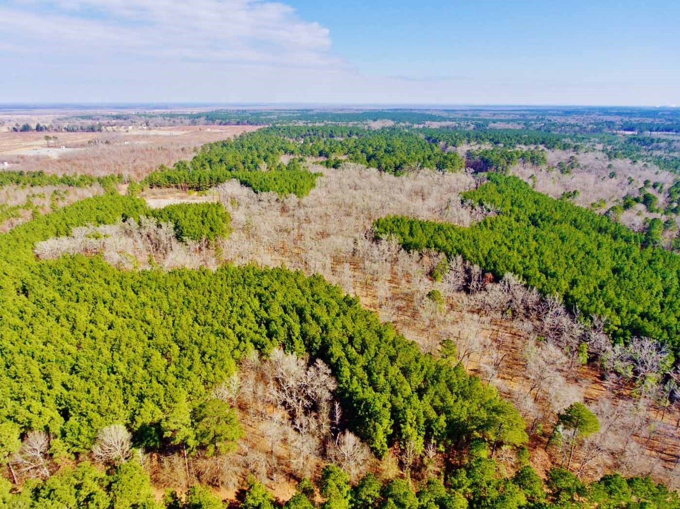 40 Acre Timber/Recreational Acreage, Frierson, LA
