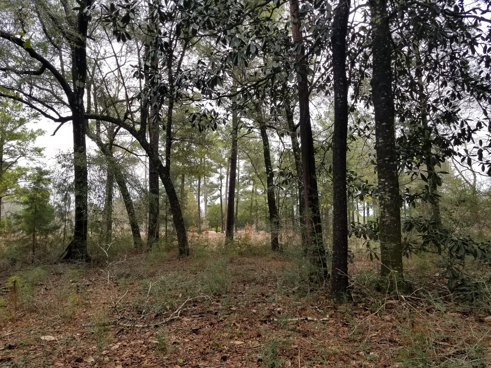 7 ACRES CHOCTAWHATCHEE RIVER ACCESS FOR SALE HARTFORD, AL
