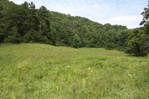 LARGE HUNTING AND RECREATIONAL TRACT IN DUNGANNON VA