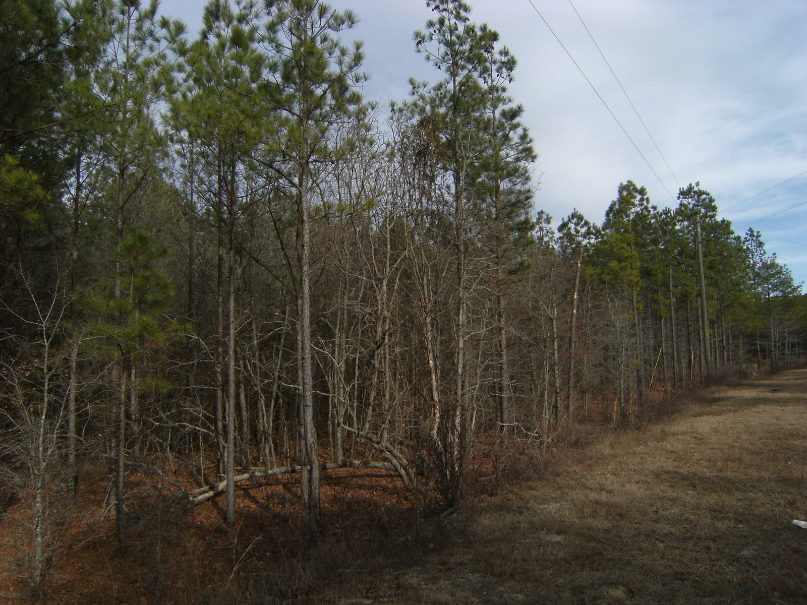 BEAUTIFUL 5.7 +/- ACRES OF WOODED LEVEL PROPERTY