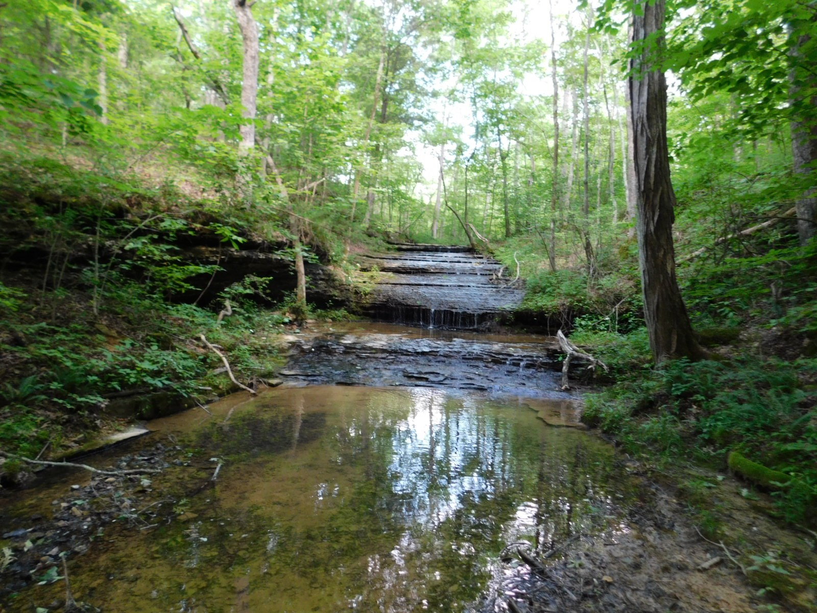 TN LAND FOR SALE WITH WATERFALL, CREEK, TIMBER, HUNTING 95AC