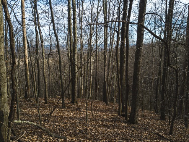 Recreational Land in Pearisburg VA for Sale!