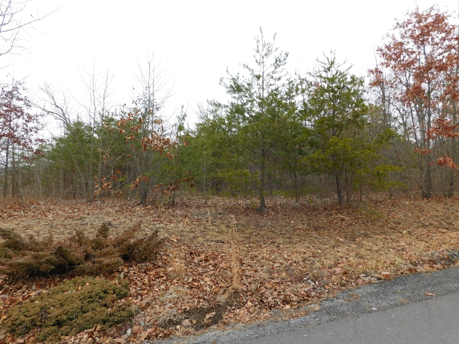 Building Lot in Oldtown MD