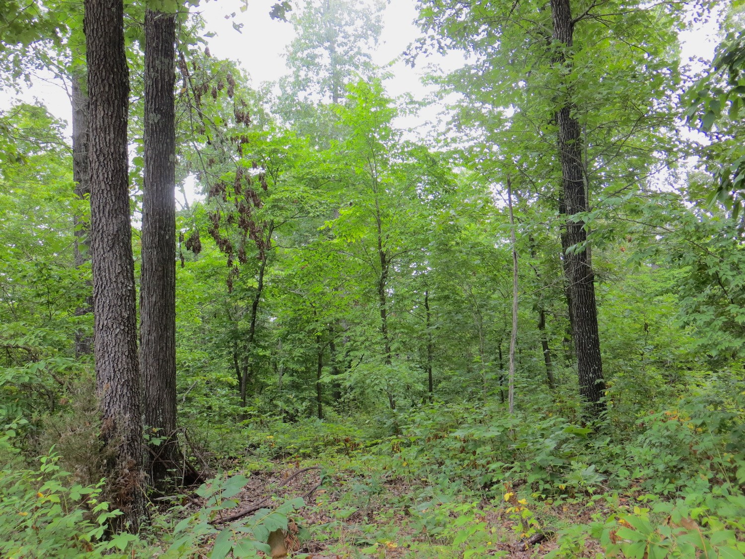 Arkansas Land For Sale