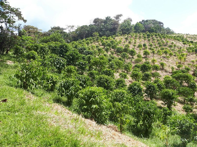 Coffee farm with storage space for Sale in Penonome Panama.