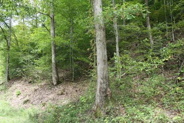Secluded Wooded Acreage For Sale In Bristol VA