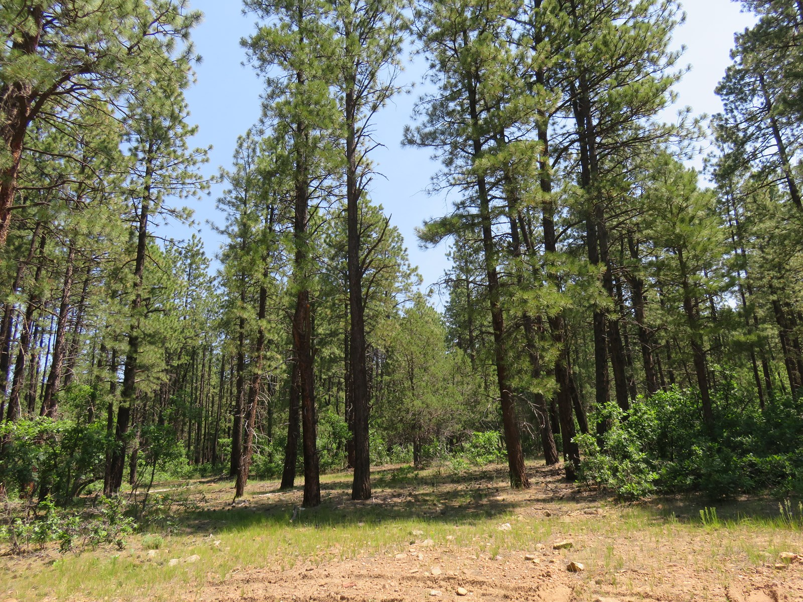 Chama NM Recreational Land For Sale, Mountain Property