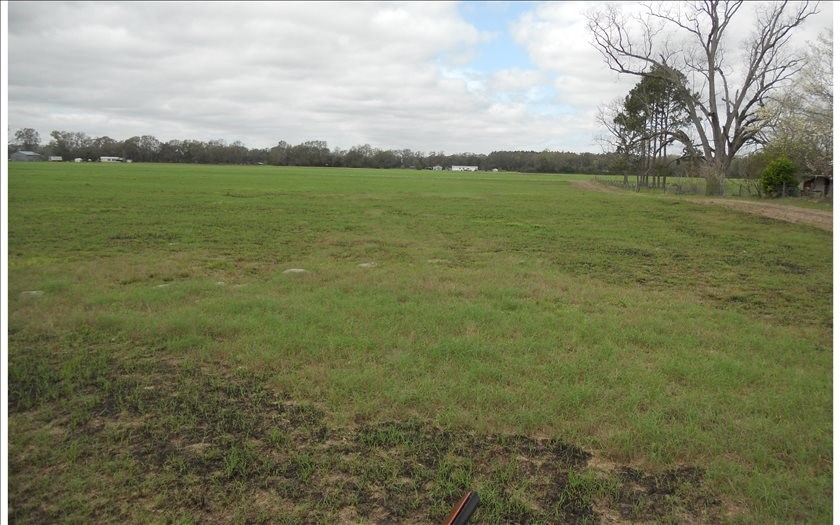 40 Cleared Acres in North Florida