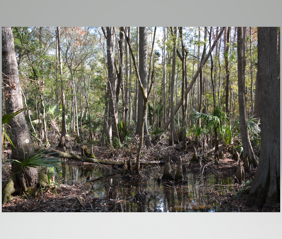 56 Acre Hunting/Recreational Property for sale in Central FL