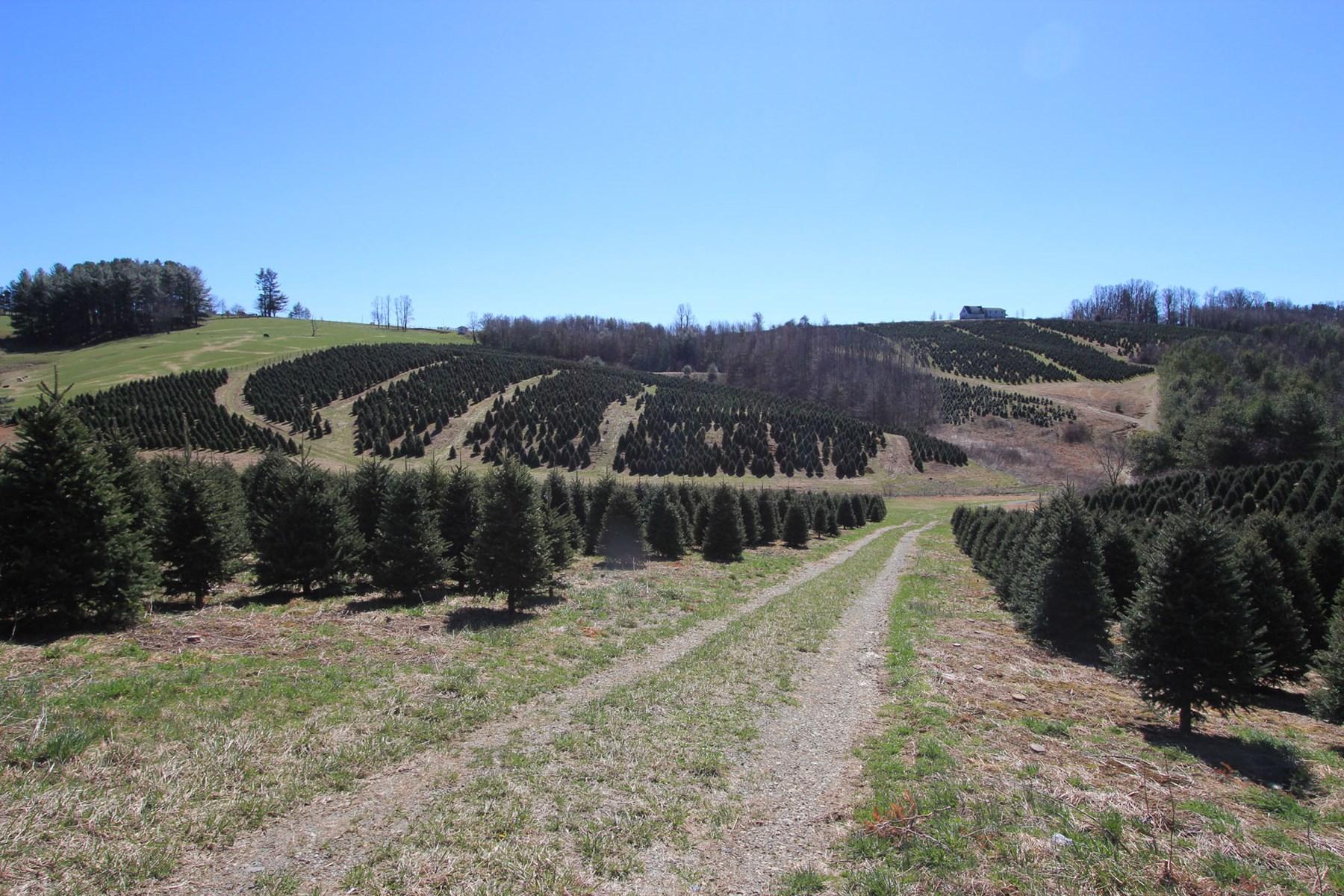 Blue Ridge Mountain Farm