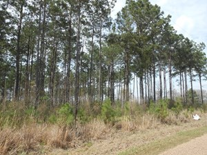 LAND FOR SALE TIMBER INVESTMENT PROPERTY LINCOLN COUNTY MS