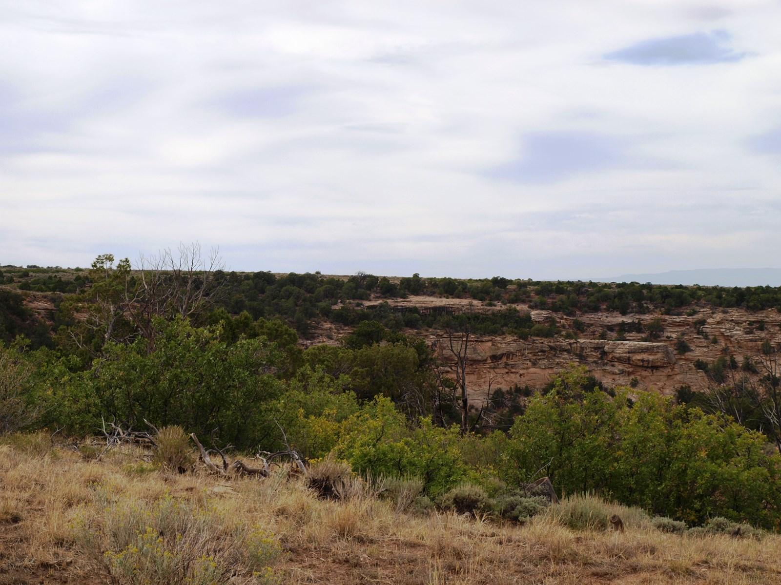 Colorado mountain land for sale, Mesa County