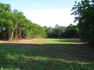 COMMERCIAL LAND IN ADAMSVILLE, TN 2.03 ACRES+/-, ON MAIN ST