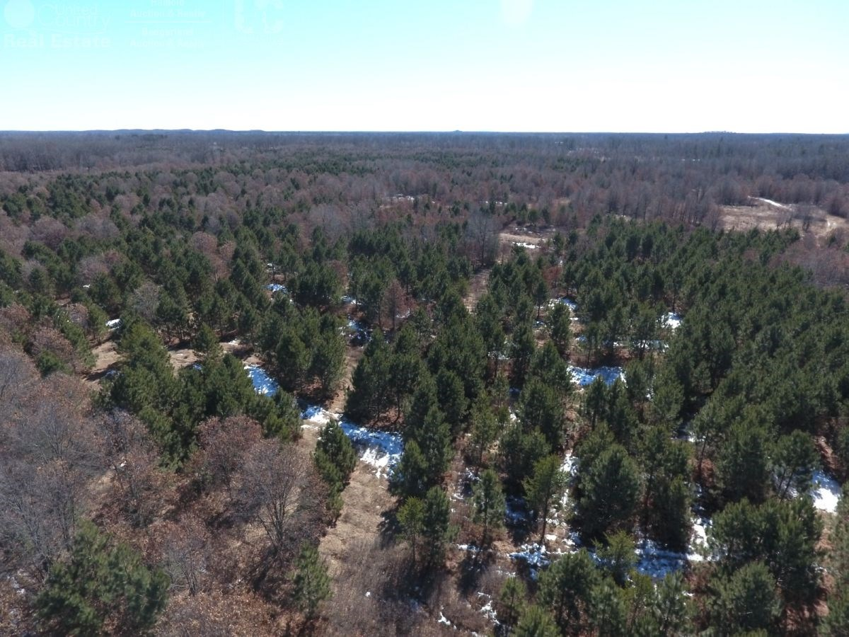 120 Acres of Adams County WI Timberland for Sale
