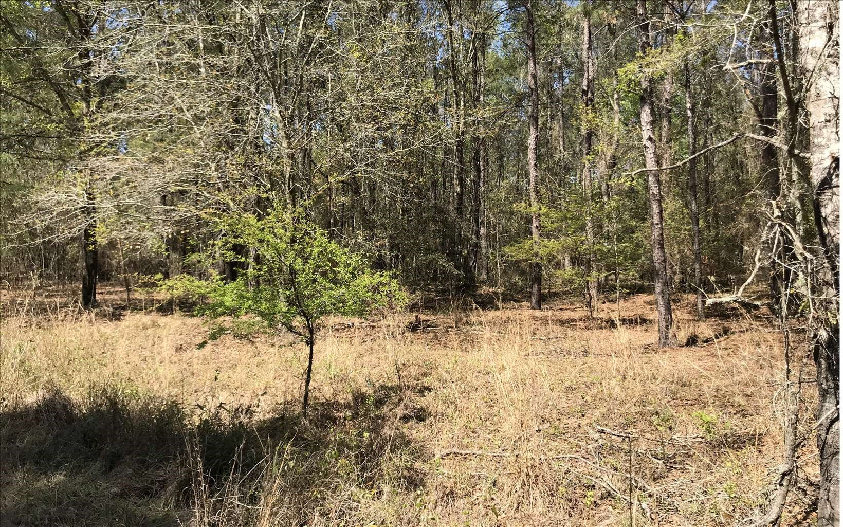 Nice Recreational Lot Close to River in North FL