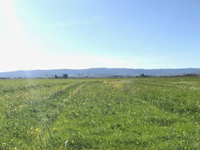 Dixon, CA, Solano County Acreage For Sale