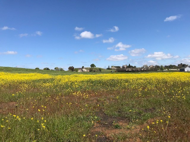 Vacaville, Solano County, CA Land For Sale