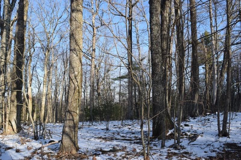 Wooded Acreage for Sale in Copper Hill VA!