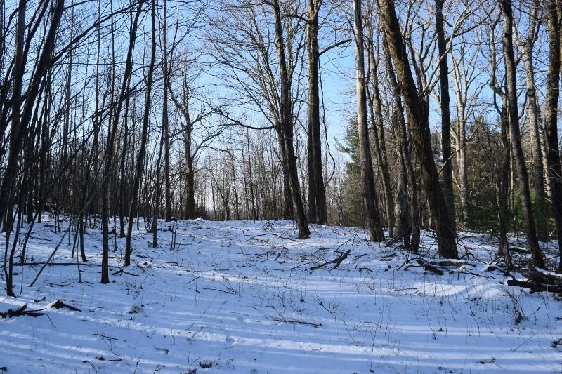 Land for Sale in Copper Hill VA!