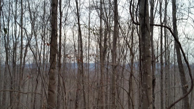 Wooded VA Recreational or Building Site with Mountain Views!