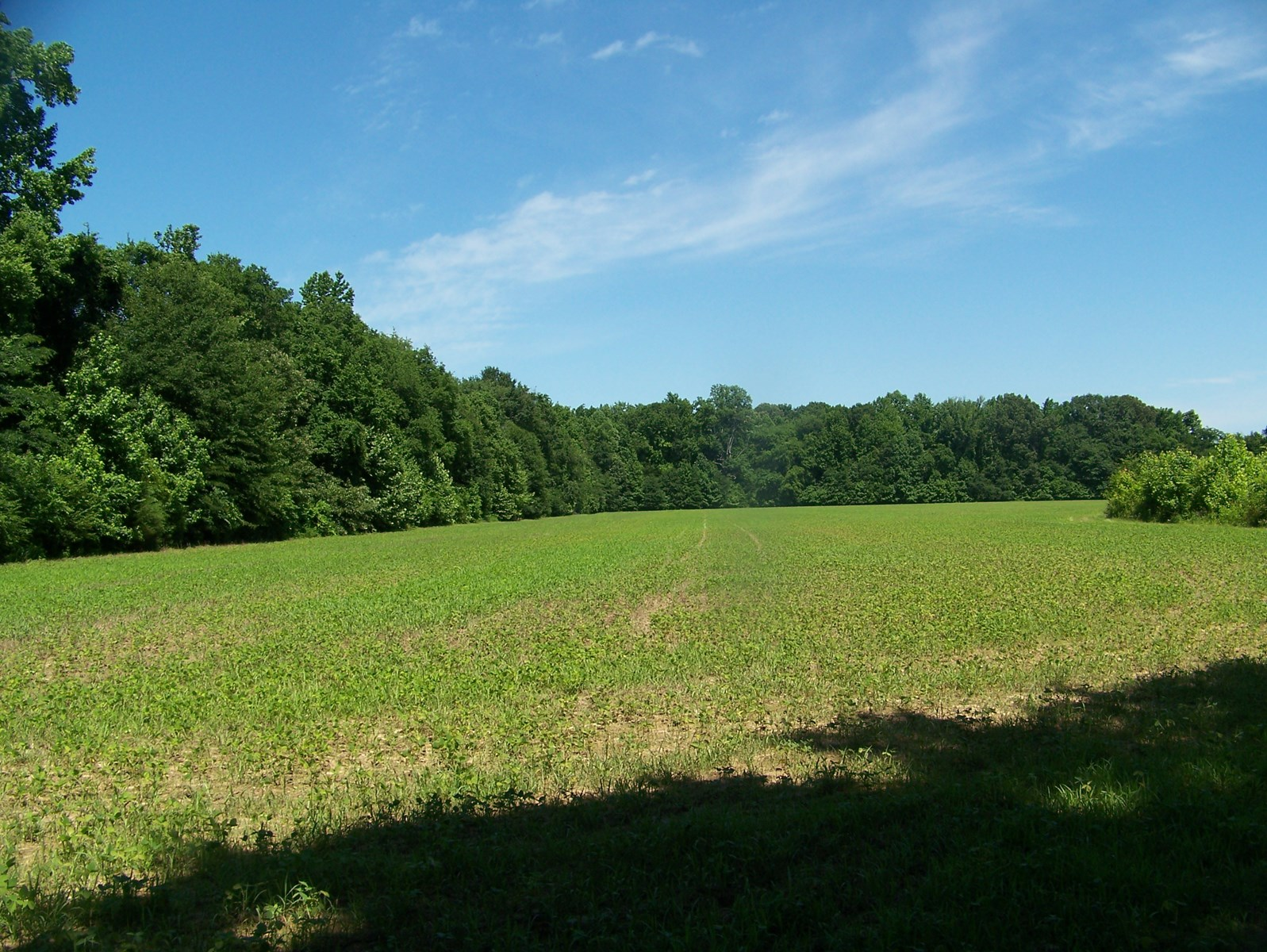 Creek Front Property In Tn W Tillable Farm Land