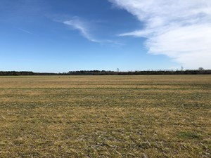 FARMLAND FOR SALE IN BEAUFORT CO., NC/ TIMBER/HUNTING TRACT