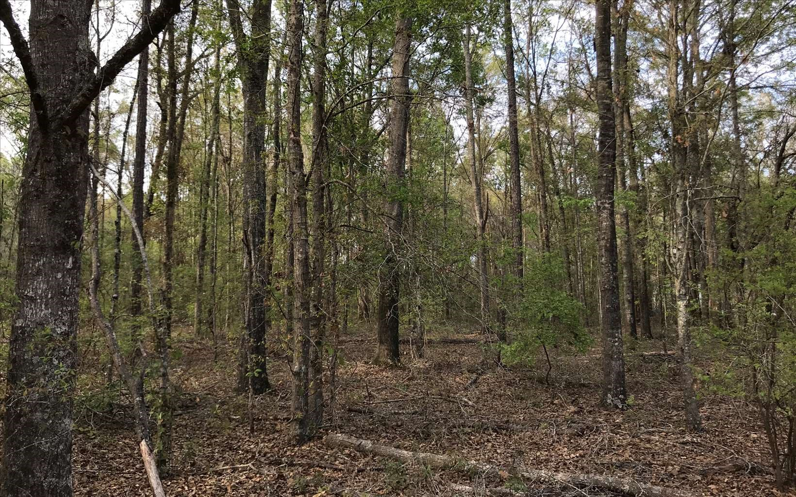 Wooded Lot in North Florida Subdivision