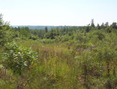 UNRESTRICTED LAND IN TN W/ A VIEW TO BUILD A COUNTRY HOME ON