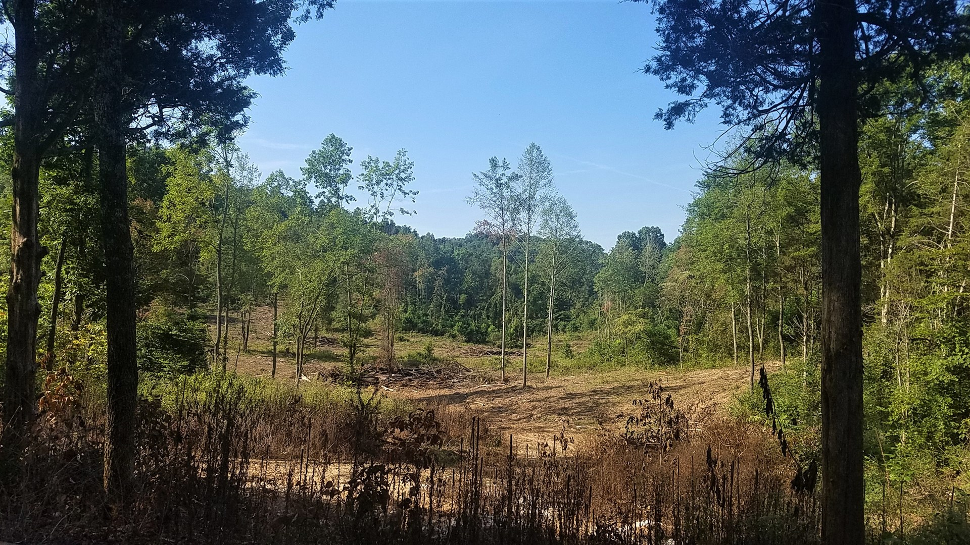 10 rolling wooded acres for building hunting or investment