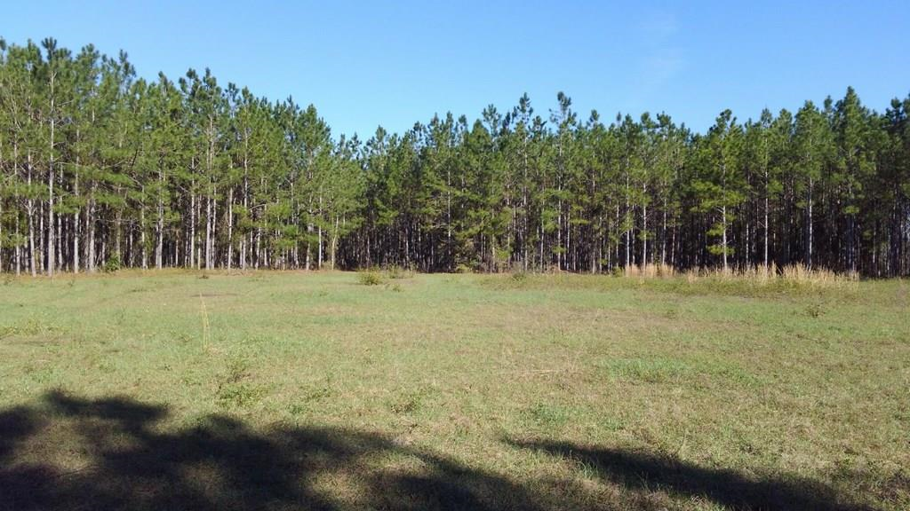 34.63 Acres of Beautiful Planted Pines
