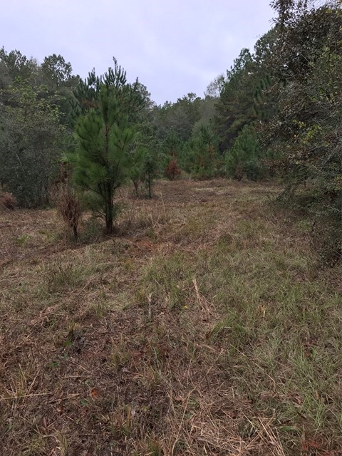 39 Acres for sale in Covington Country