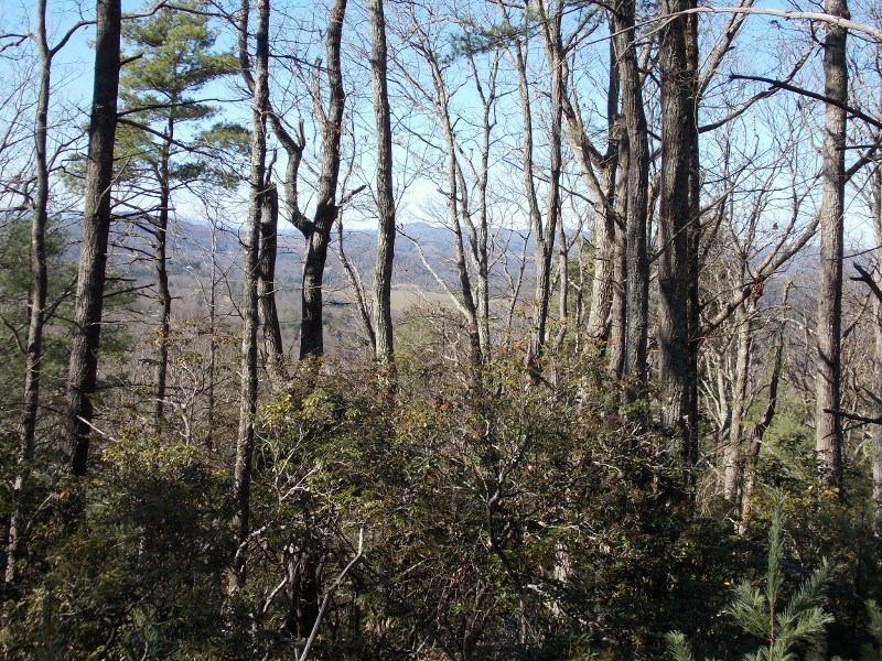 Wooded Building Lot in Private Setting in Floyd VA for Sale!