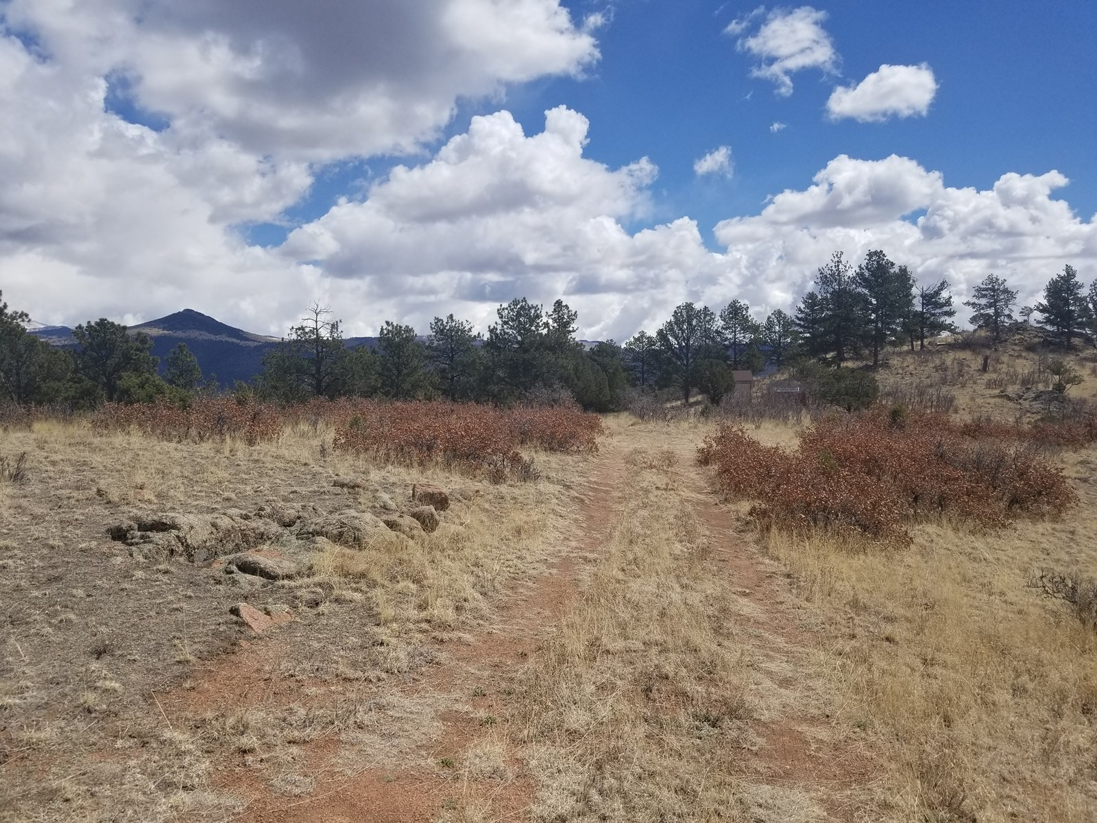 20 acres - Central Colorado Mountains