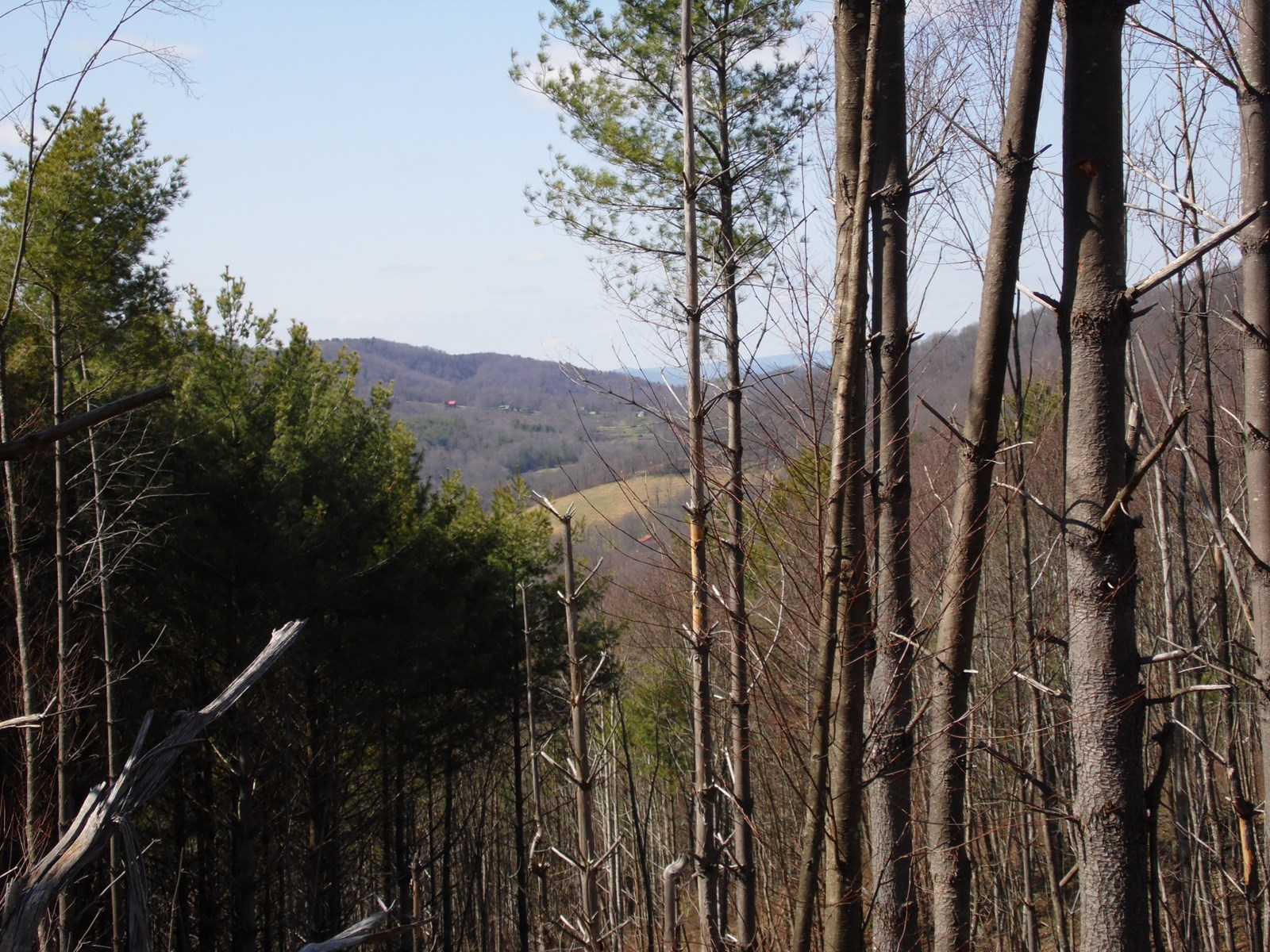 Partially Wooded Hunting Tract for Sale Alleghany County