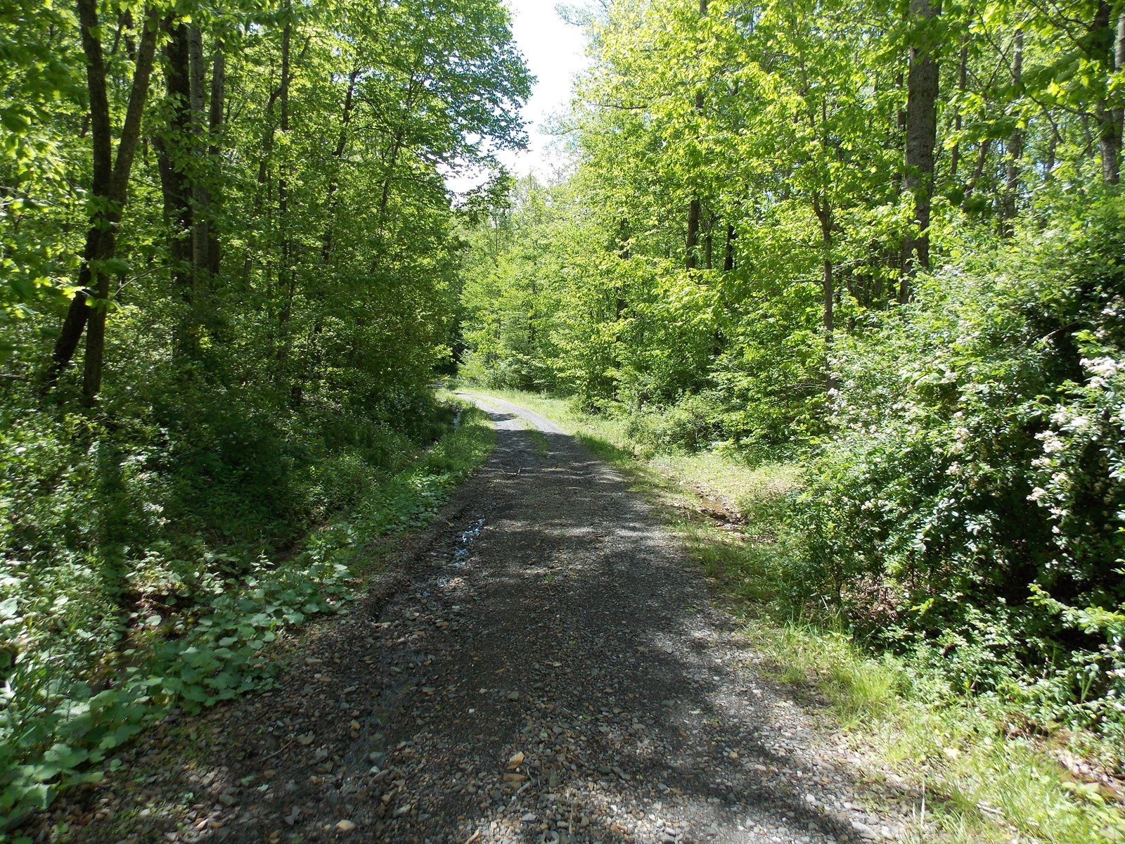 Large Acreage Bordering the Blue Ridge Parkway in Floyd VA!