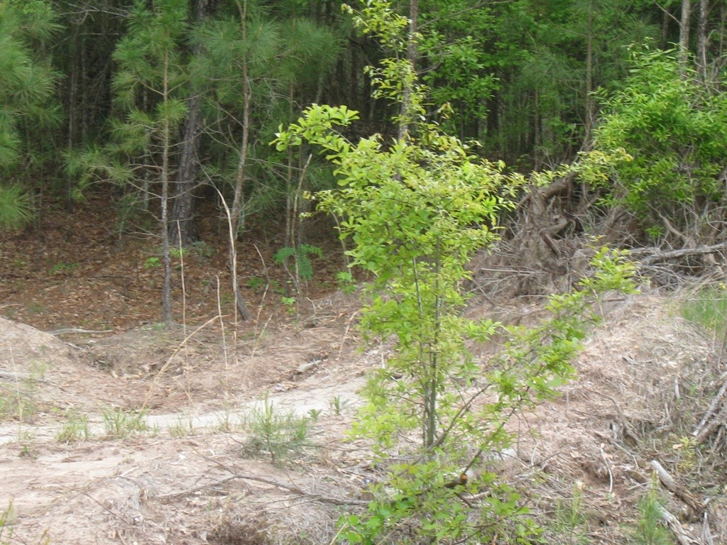 UNDEVELOPED COMMERCIAL LAND INSIDE CITY LIMITS, PALESTINE TX