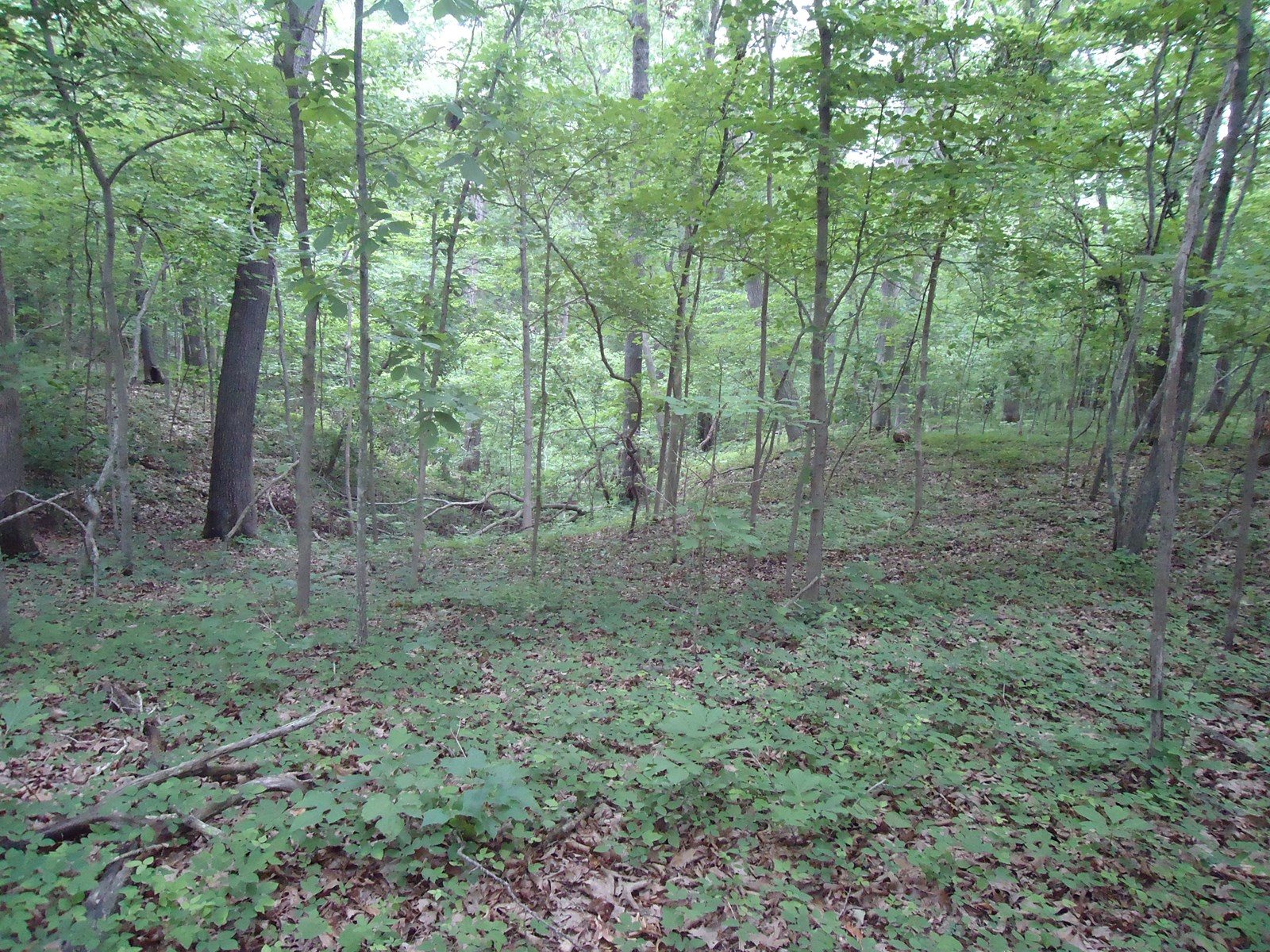 5 Acres of Missouri Hunting Land At The Lake Of The Ozarks