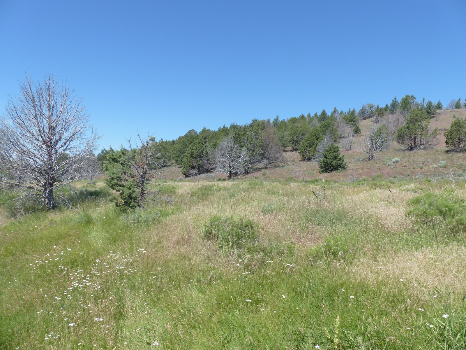 RECREATIONAL HUNTING PROPERTY NEAR FRENCHGLEN OR