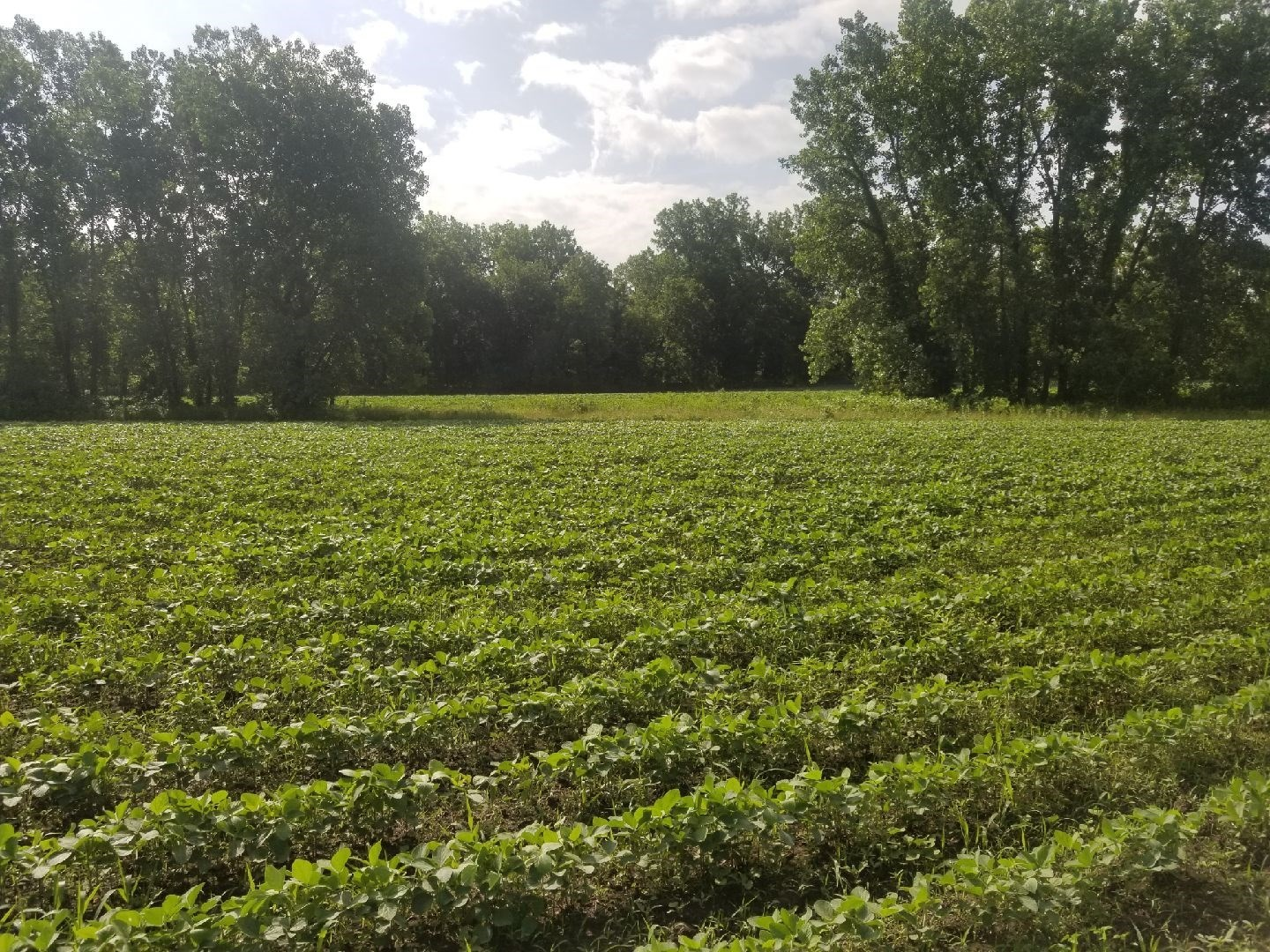 MO FARMLAND FOR SALE, INVESTMENT POTENTIAL, HUNTING, INCOME