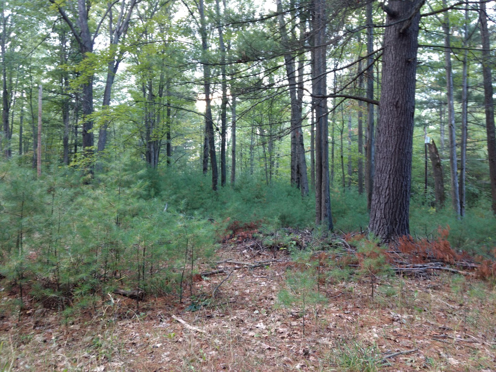 Northern MI property for sale near Rush Lake Atlanta MI
