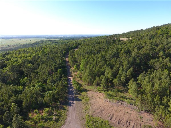 50 ACRE TIMBER INVESTMENT & HUNTING PROPERTY ON SUGAR LOAF