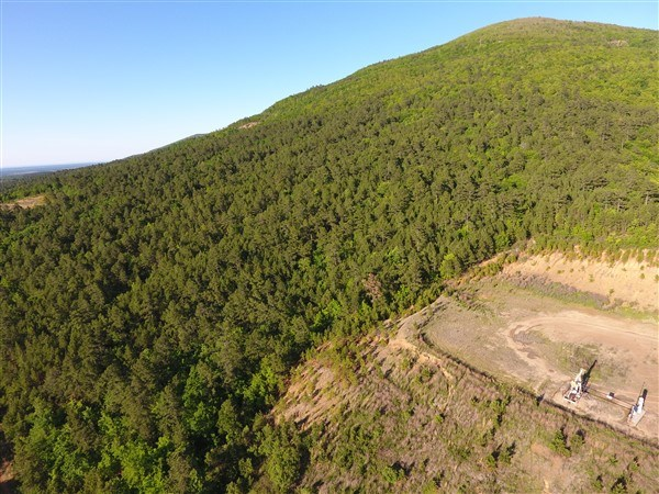 50 Acre Timber Investment and Hunting Property on Sugar Loaf