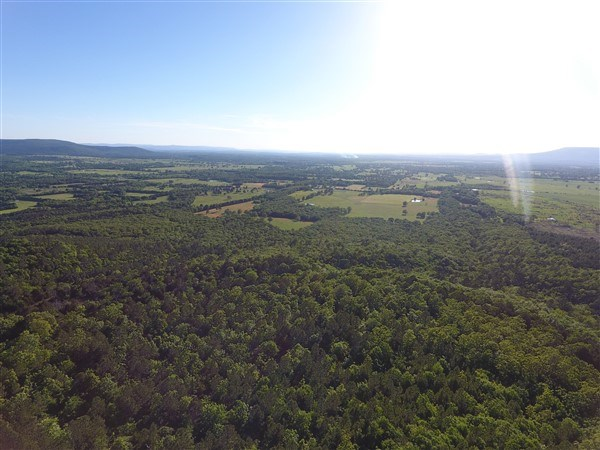 90 Acre Timber Investment and Hunting Property on Sugar Loaf